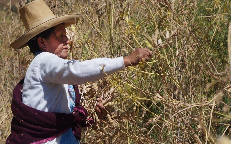 Guardianes de los alimentos de los Andes peruanos