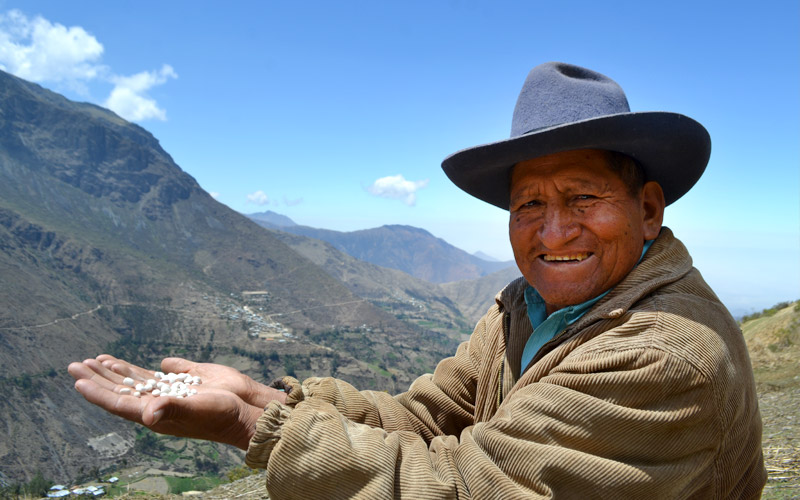 Orgulloso productor de tarwi